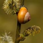 Classis Gastropoda - Buikpotigen
