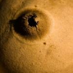 Geastrum triplex - Gekraagde Aardster