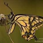 Phylum Arthropoda - Geleedpotigen