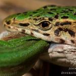 Classis Reptilia - Reptielen